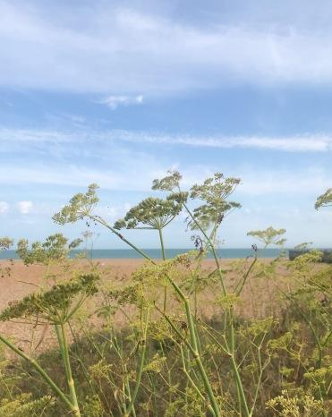 Fennel seeds on Deal Beach