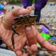 The three-legged crab