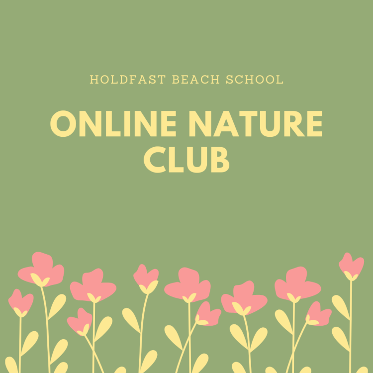 Holdfast beach school (1)